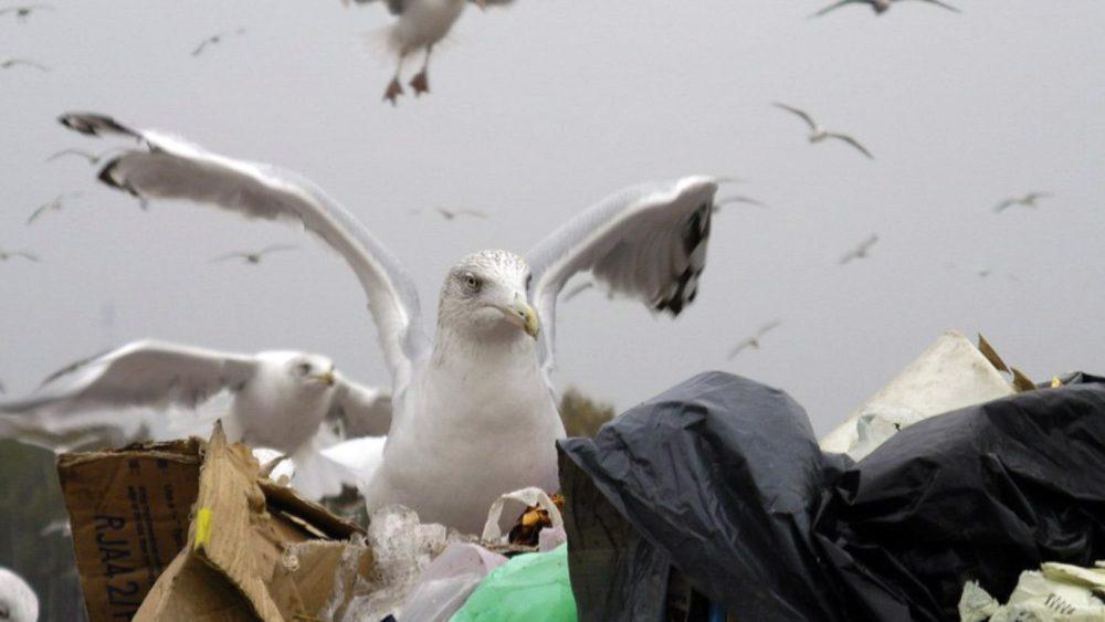 Getliņu izgāztuve. Foto - Kaspars Funts