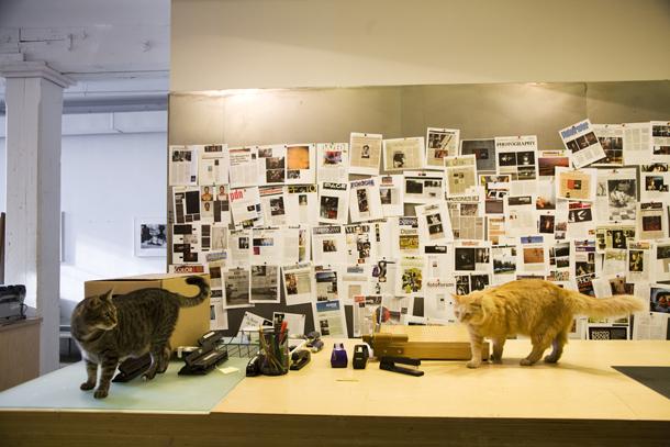 Biroja kaķi Volkers un Vīdžī. Foto - Elīna Ruka