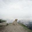 Bez nosaukuma 2, Bogota, no sērijas Dog Days, Bogota