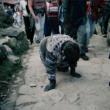 Bez nosaukuma 43, Bogota, no sērijas Dog Days, Bogota