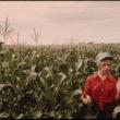 Flips Šulke (Schulke, Flip), Pusaugu strādnieks novāc ražu kukurūzas laukā netālu no Ulmas, Minesotā