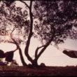 Flips Šulke (Schulke, Flip), Tūristi guļ šūpuļtīklos treilerparkā