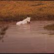 Bils Rīvs (Reaves, Bill), Lindona Džonsona ezers