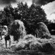 Uģis Niedre. Siena talka Vitrupes pļavā. Limbažu rajons. 1980. g.