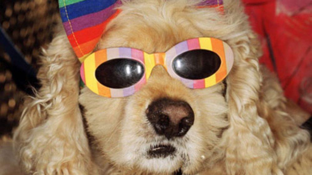 Martins Pārs. Suns ar saulesbrillēm, Kalifornija, 1998