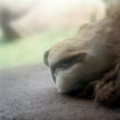 Kolīna Plamba. Guļošs lauva, 2005