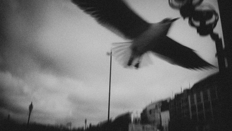 """Romāns Drics. No sērijas """"Paradies"""", 2011"""