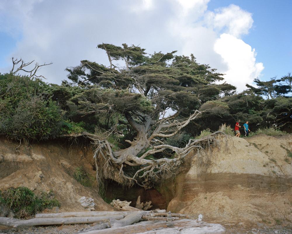 Dzīves koks. Foto - Anna Bīke