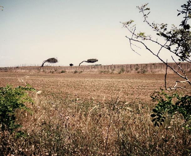 Mišela Palermo. Kastelvolturno, Kampaņa, Itālija, 2012. Kastelvolturno ir viens no nabadzīgākajiem reģioniem Kampaņas apgabalā, tajā spēcīgi darbojas mafija. Kopš 1980. gada šeit ieplūst daudz Āfrikas imigrantu. Imigrantu strādnieki pārsvarā tiek iesaistīti lauku apstrādāšanā un ražas novākšanā, kas ir svarīgākie apgabala rūpali
