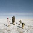 MIkele Palaci. Mongolija, Gobi, Omongovi, 2013. Tuvšinbajars kopā ar sievu piesien kamieli pirms nokaušanas.