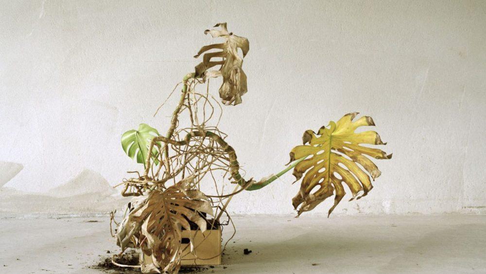"Sāra Bjarlanda. No sērijas ""Forsaken"", 2011-12"