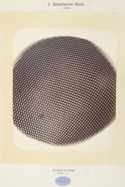 """Vilhelms Bērmans, Mušas acs, 1870. No izstādes """"Radiācija"""""""